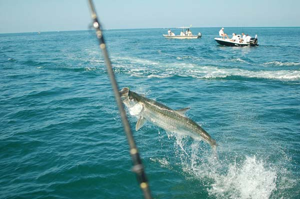 Boca grande tarpon fishing charters florida tarpon for Tarpon fishing charters