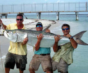 Monster Tarpon
