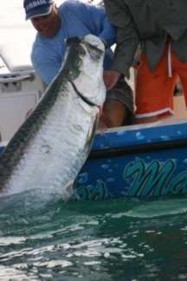 Tarpon Fishing Charters Fort Myers